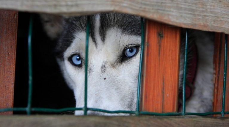 Así se como la ley castiga el maltrato animal en la CDMX