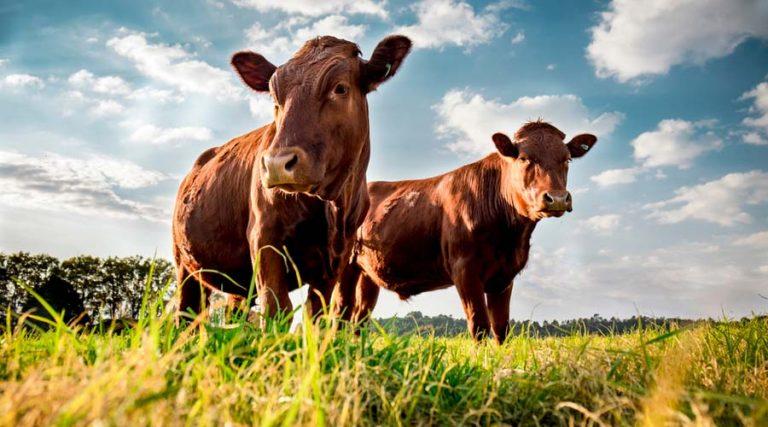 iva para el alimento de ganado
