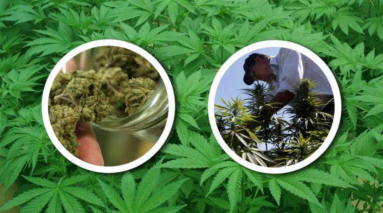 legalizar-la-marihuana-en-méxico-incrementaría-la-recaudación-de-impuestos
